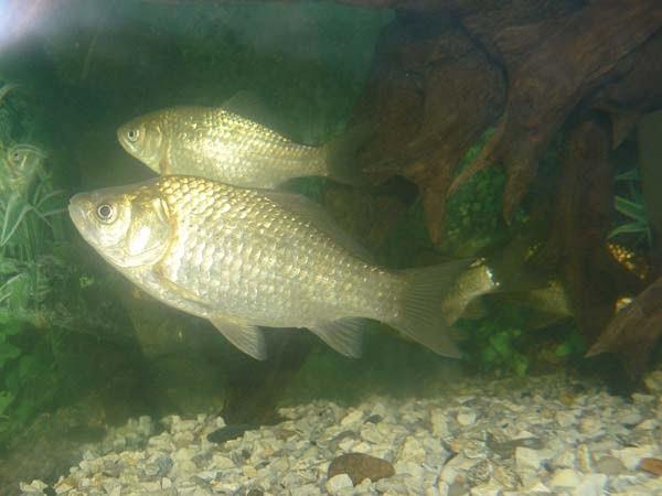 перловая каша для рыбалки рецепт