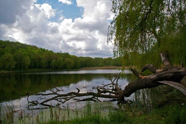 Признаки карасиного места - растительность и коряги
