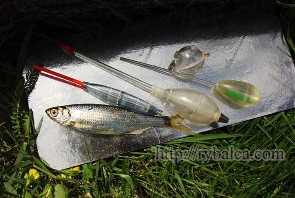 Для ловли жереха на живца используются водоналивные поплавки и сбирулино