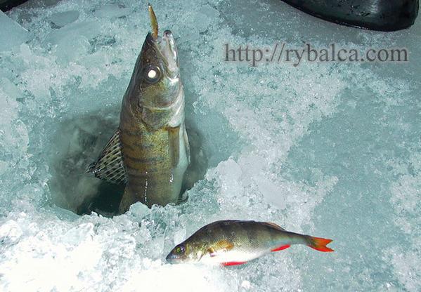 способы ловли рыбы зимой сетями