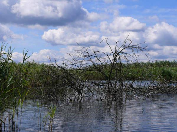Камыши коряжник и глубина - хорошее место для ловли сазана