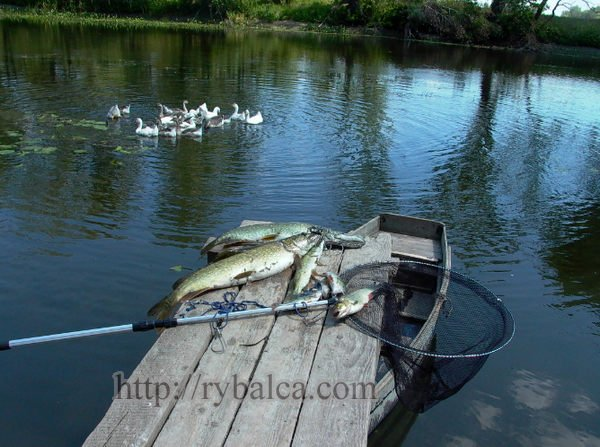 Рыбалка на реке_1