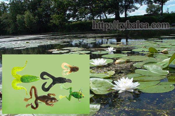 Обширные травянистые мелководья и окна среди кувшинок - прекрасные места для ловли на пластиковых силиконовых лягушек