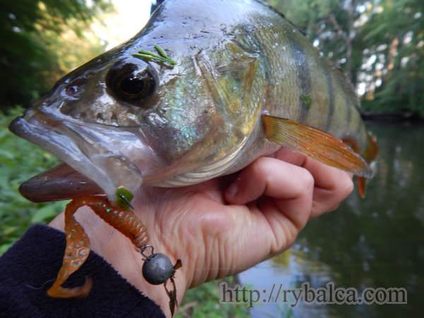 Рыбалка. Окунь на микроджиг фото