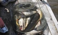 итог рыбалки