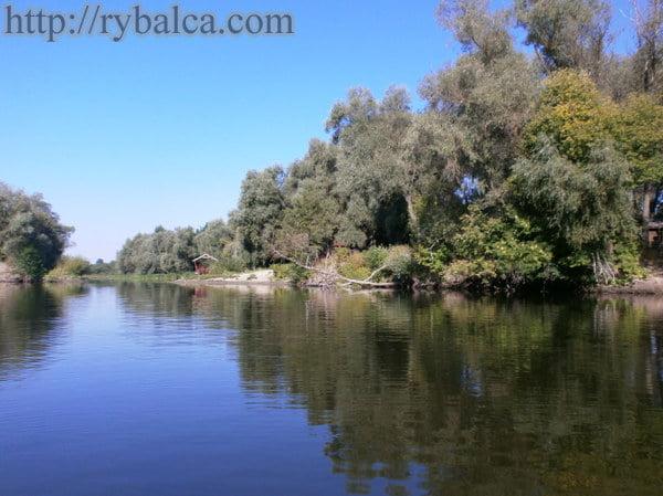 река десна московская область рыбалка