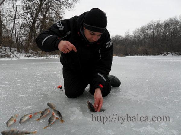 Алексей Лисица зимняя рыбалка