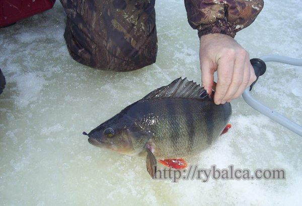 Рыбалка на джиг с берега
